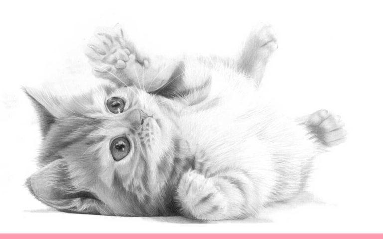 CUTE PUDDY CAT