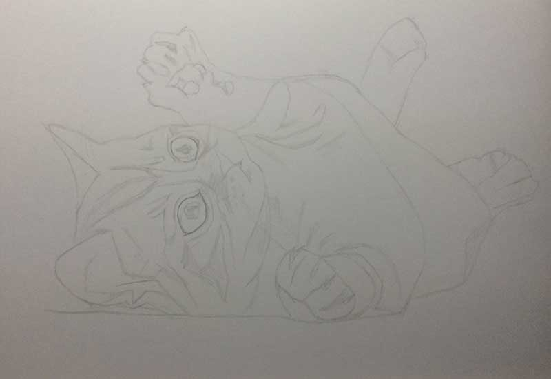 Realistic Pencil Drawing of a Puddy Cat. Work in Progress Image 1, by Artist Sophie Lawson