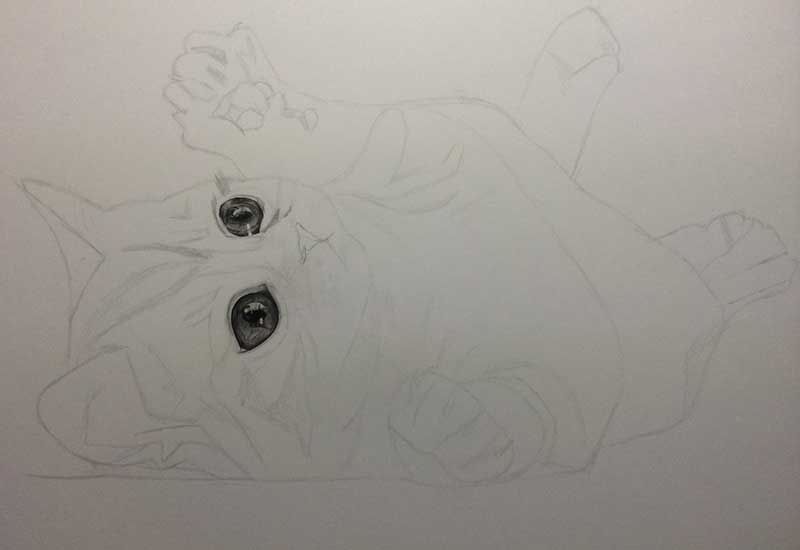 Realistic Pencil Drawing of a Puddy Cat. Work in Progress Image 2, by Artist Sophie Lawson