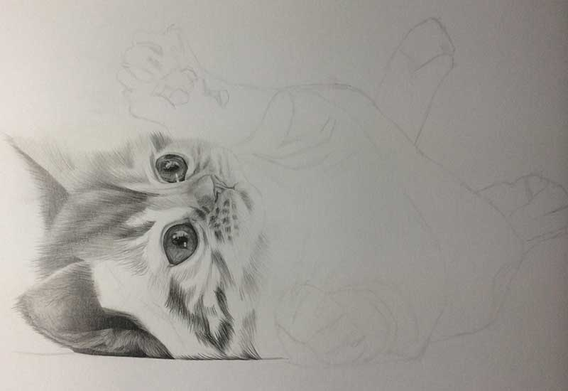 Realistic Pencil Drawing of a Puddy Cat. Work in Progress Image 3, by Artist Sophie Lawson