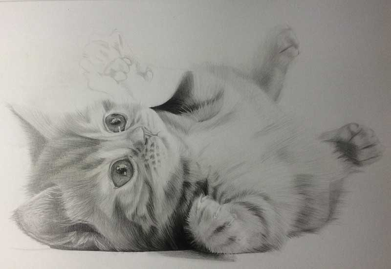 Realistic Pencil Drawing of a Puddy Cat. Work in Progress Image 4, by Artist Sophie Lawson