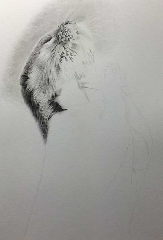 Praying Otter Realistic Pencil Drawing Work in Progress Image 2, by Transgender Artist Sophie Lawson