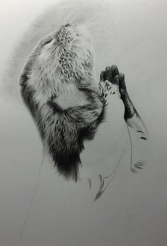 Praying Otter Realistic Pencil Drawing Work in Progress Image 3, by Transgender Artist Sophie Lawson
