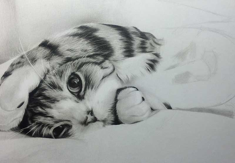 Cat realistic pencil drawing work in progress image 3 by artist sophie lawson