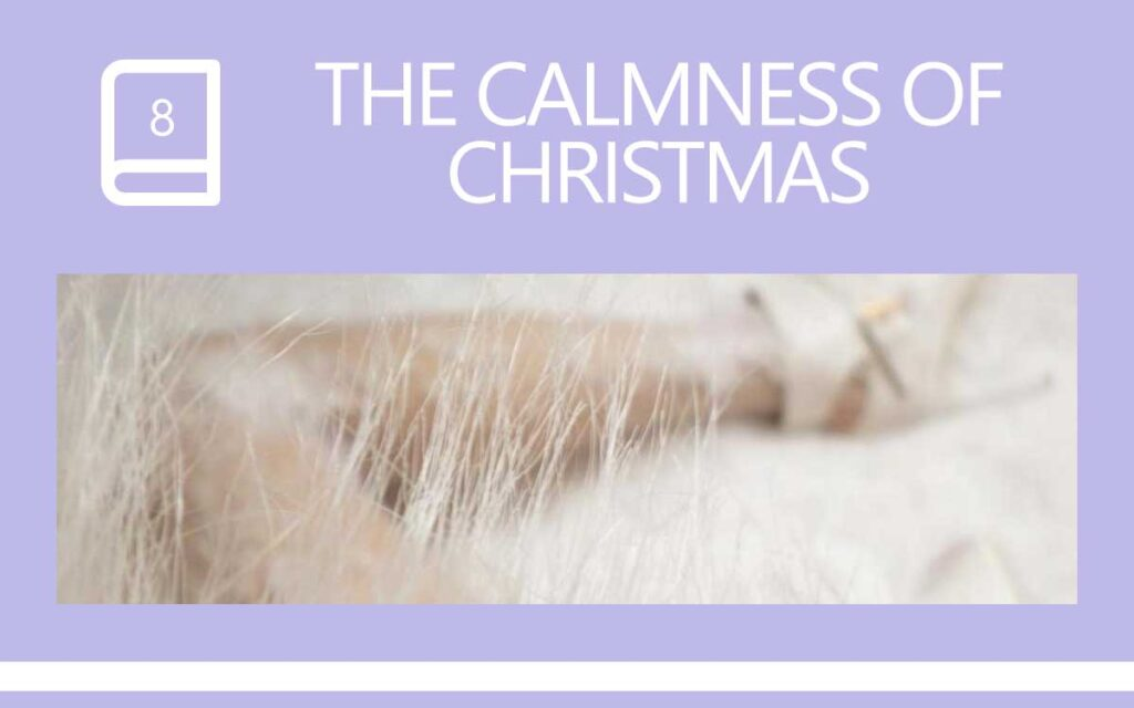 The Calmness of Christmas ... a Transgender Diary Entry with Transgender Artist & Model Sophie Lawson