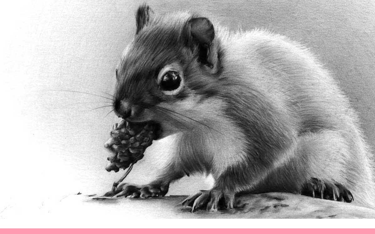 Realistic Pencil Drawing of a Squirrel, by Transgender Artist Sophie Lawson Featured image