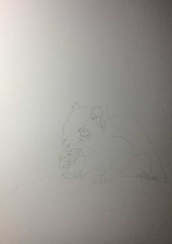 Realistic Pencil Drawing of a Squirrel. Work in Progress Image 1, by Artist Sophie Lawson