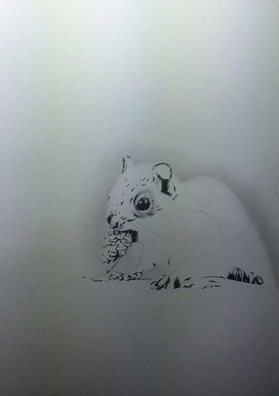 Realistic Pencil Drawing of a Squirrel. Work in Progress Image 2, by Artist Sophie Lawson