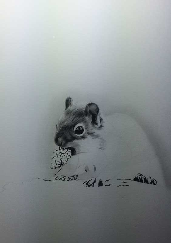 Realistic Pencil Drawing of a Squirrel. Work in Progress Image 3, by Artist Sophie Lawson