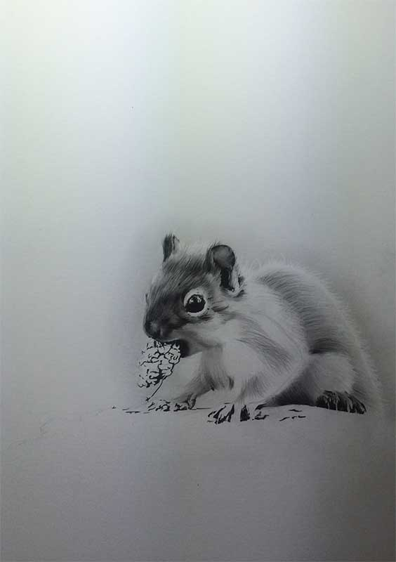 Realistic Pencil Drawing of a Squirrel. Work in Progress Image 4, by Artist Sophie Lawson