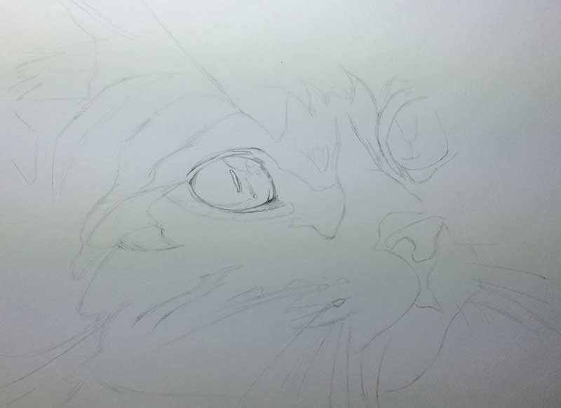 Cat Graphite Realistic Pencil Drawing entitled 'Eyes on the Prize' Work in Progress Image 1 by Transgender Artist Sophie Lawson