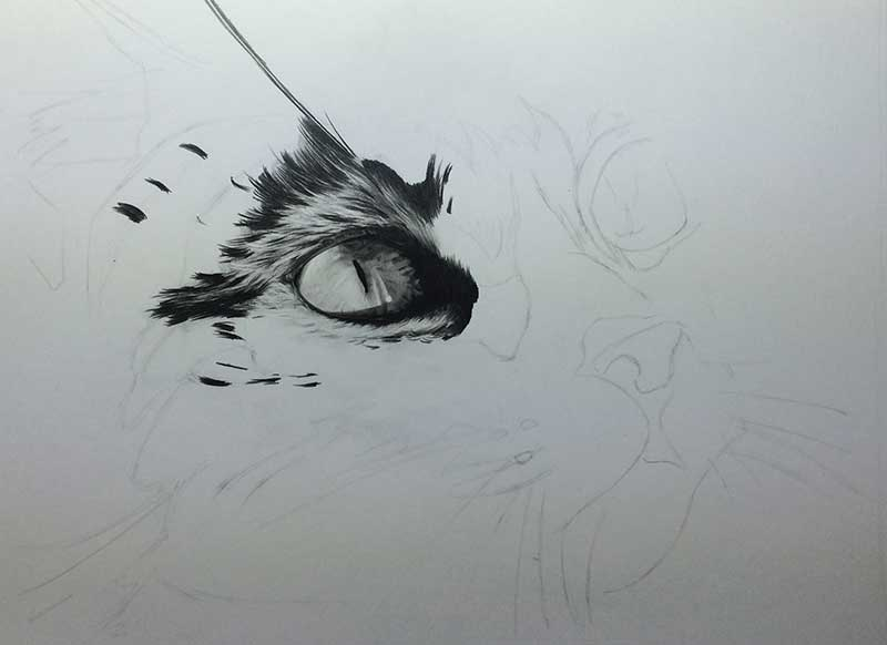 Cat Graphite Realistic Pencil Drawing entitled 'Eyes on the Prize' Work in Progress Image 2 by Transgender Artist Sophie Lawson