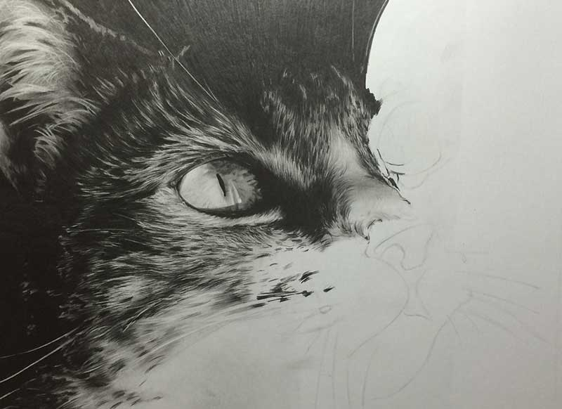 Cat Graphite Realistic Pencil Drawing entitled 'Eyes on the Prize' Work in Progress Image 3 by Transgender Artist Sophie Lawson
