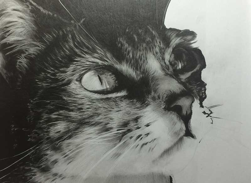 Cat Graphite Realistic Pencil Drawing entitled 'Eyes on the Prize' Work in Progress Image 4 by Transgender Artist Sophie Lawson