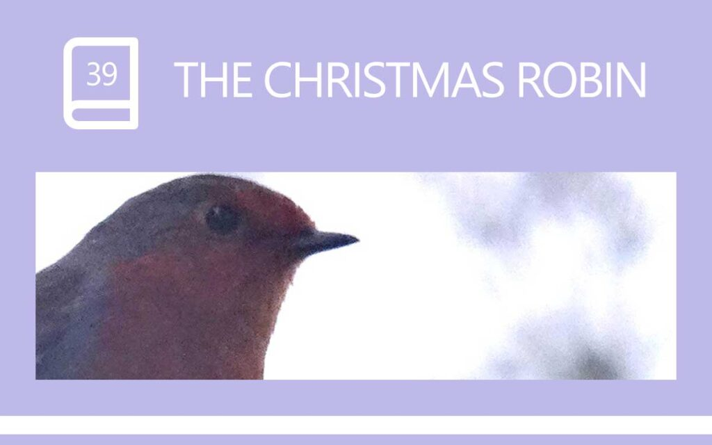 THE CHRISTMAS ROBIN - An special encounter in Nature, with Transgender Model & Artist Sophie Lawson Posing at Saltrum, Plymouth