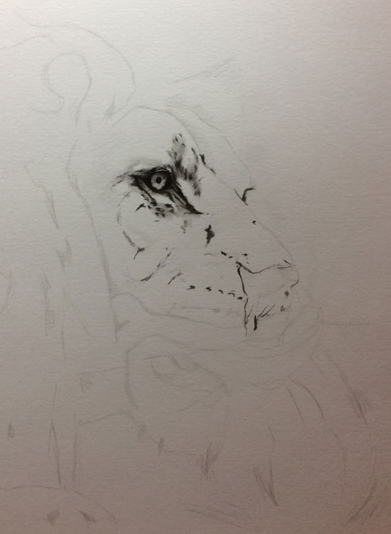 Realistic Lion Pencil Drawing - Out Of The Shadows - Work in Progress image 1, by Artist Sophie Lawson
