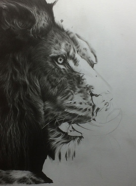 Realistic Lion Pencil Drawing - Out Of The Shadows - Work in Progress image 3, by Artist Sophie Lawson