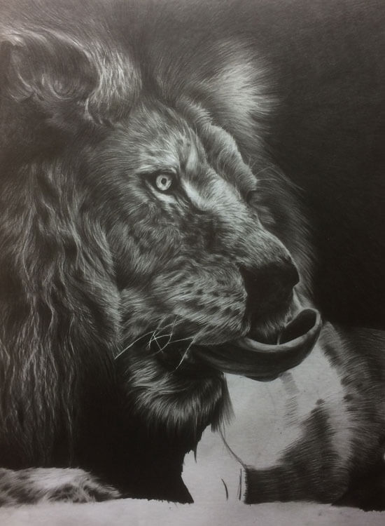 Realistic Lion Pencil Drawing - Out Of The Shadows - Work in Progress image 4, by Artist Sophie Lawson
