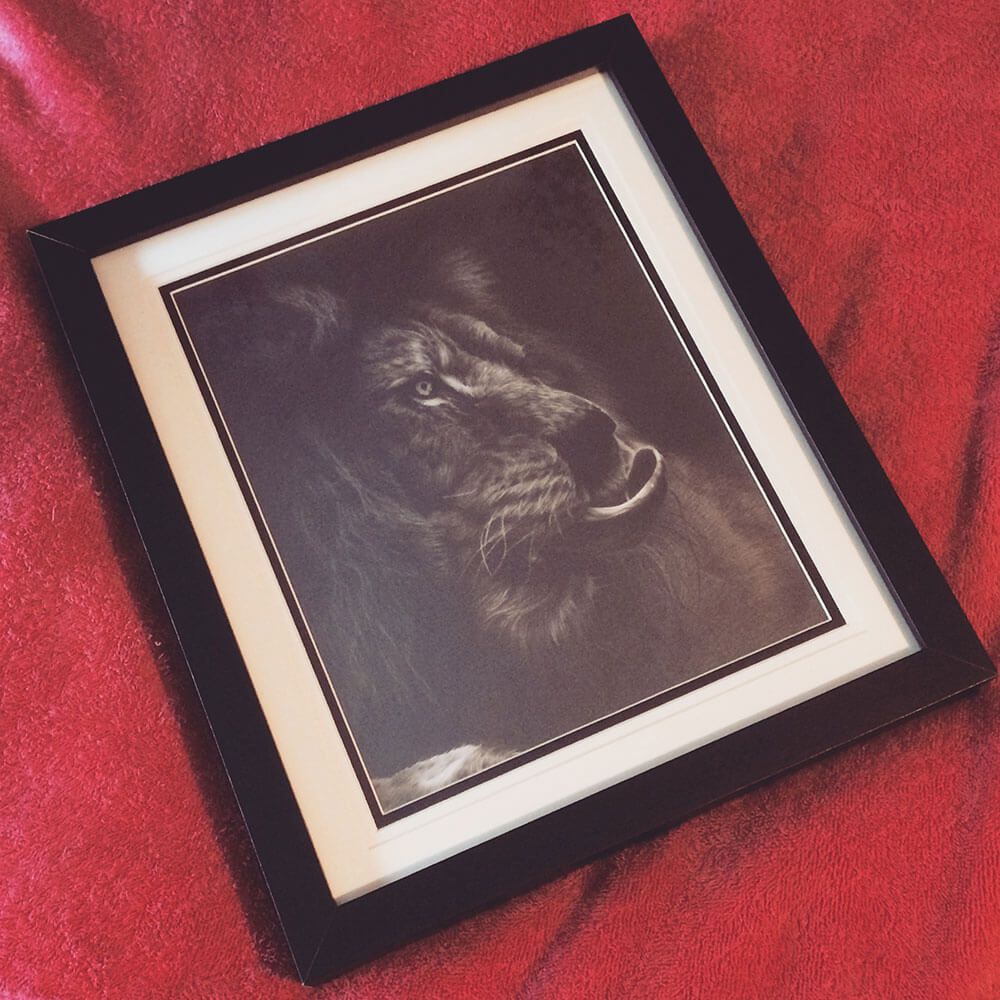 Framed Realistic Lion Pencil Drawing entitled Out Of The Shadows, by Transgender Artist Sophie Lawson