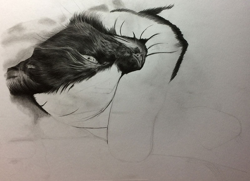 Realistic Pencil Drawing of Scarlet the Cat, Work in Progress Image 2, by Transgender Artist Sophie Lawson