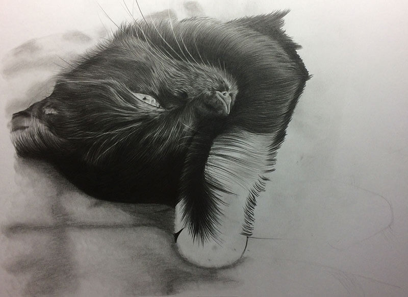 Realistic Pencil Drawing of Scarlet the Cat, Work in Progress Image 3, by Transgender Artist Sophie Lawson