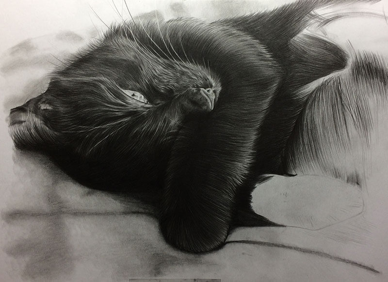 Realistic Pencil Drawing of Scarlet the Cat, Work in Progress Image 4, by Transgender Artist Sophie Lawson