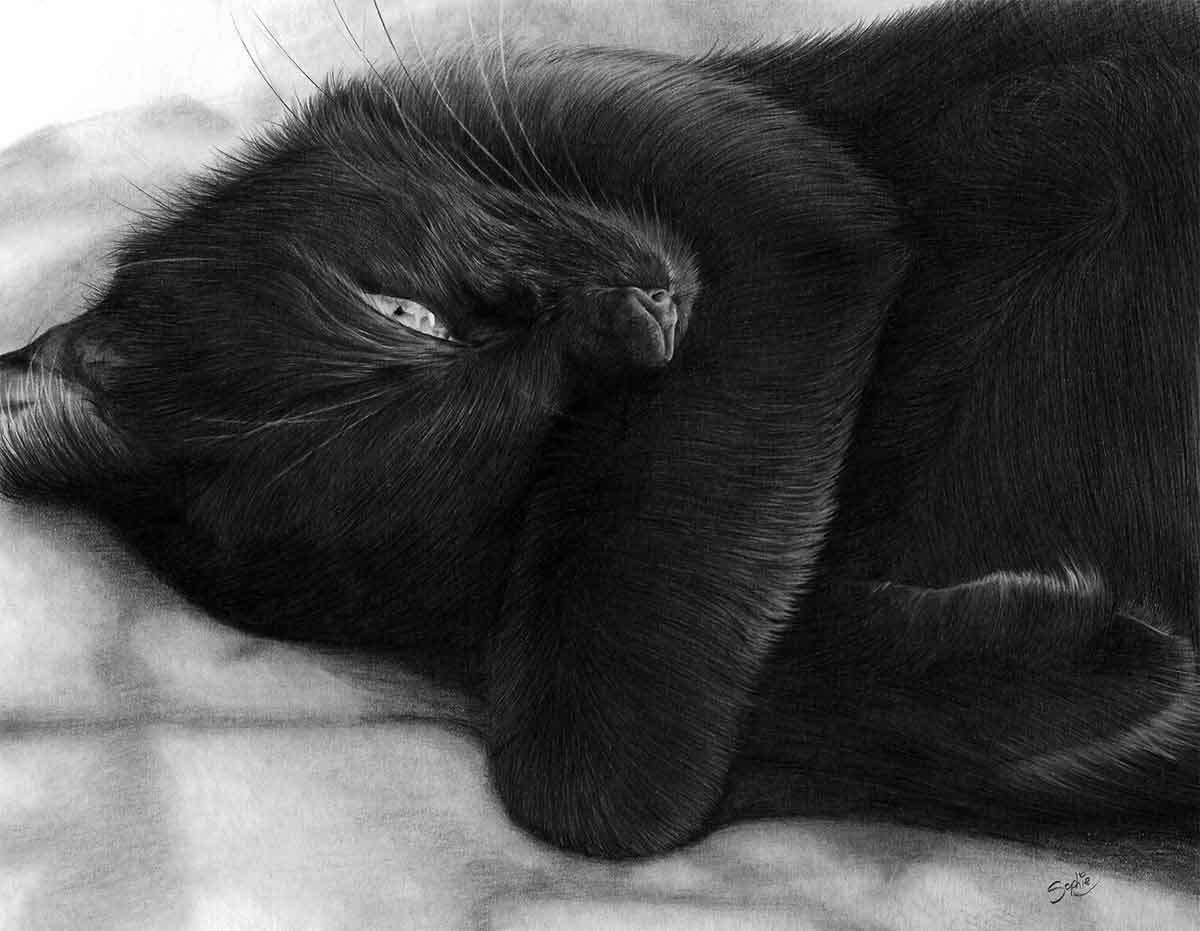 Realistic Pencil Drawing of Scarlet the Cat, by Transgender Artist Sophie Lawson