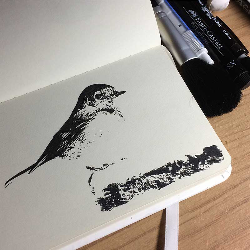 Robin Bird Ink Drawing. Day 17 of Inktober 2018, with Transgender Artist Sophie Lawson