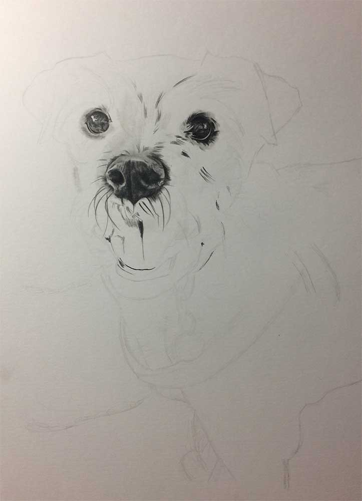 Realistic Pencil Drawing of Saffi the Doggy, Work in Progress Image 1, by Transgender Artist Sophie Lawson