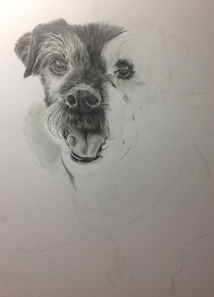 Realistic Pencil Drawing of Saffi the Doggy, Work in Progress Image 2, by Transgender Artist Sophie Lawson