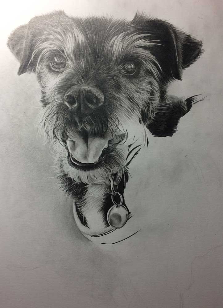 Realistic Pencil Drawing of Saffi the Doggy, Work in Progress Image 3, by Transgender Artist Sophie Lawson
