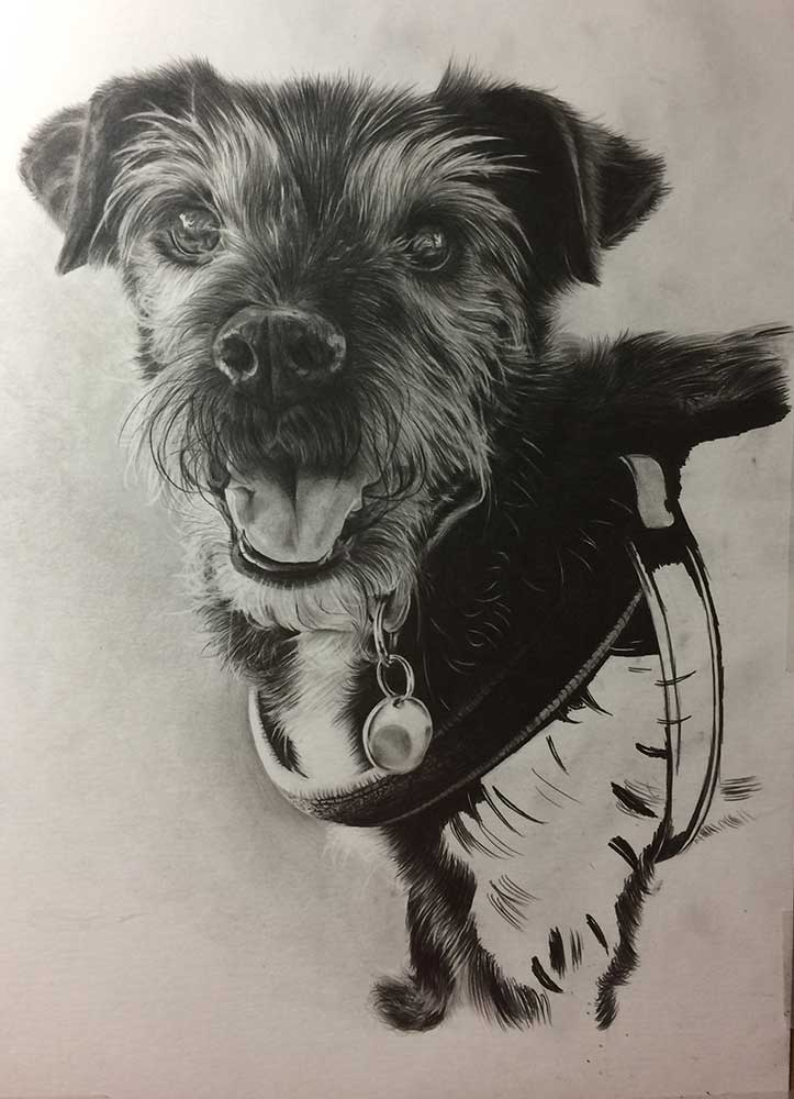 Realistic Pencil Drawing of Saffi the Doggy, Work in Progress Image 4, by Transgender Artist Sophie Lawson