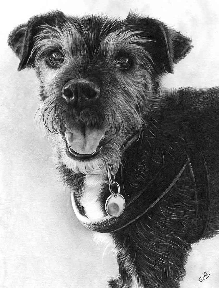 Realistic Pencil Drawing of Saffi the Doggy, by Transgender Artist Sophie Lawson