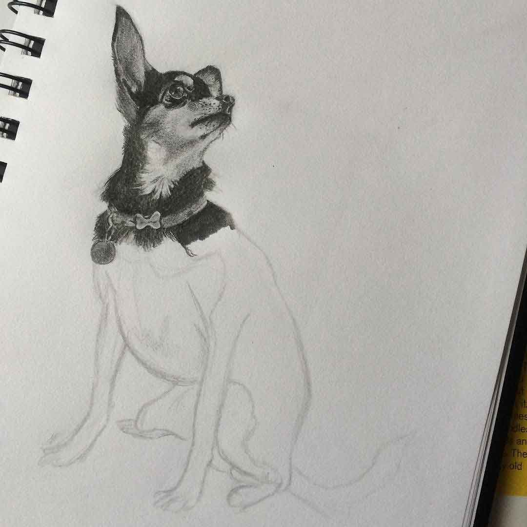 GRAPHITE PENCIL DOG SKETCH