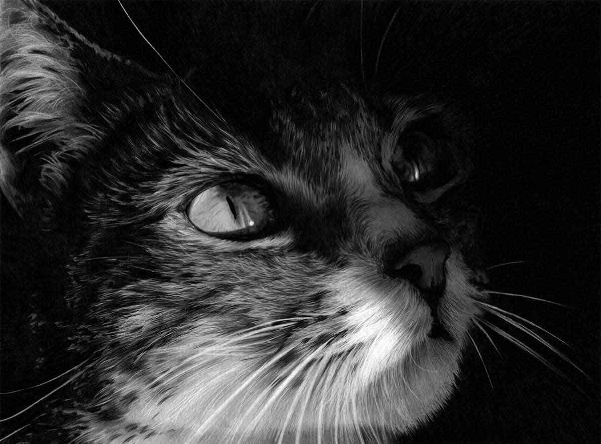 Cat 'Eyes on the Prize' Graphite Pencil Drawing, by Transgender Artist Sophie Lawson