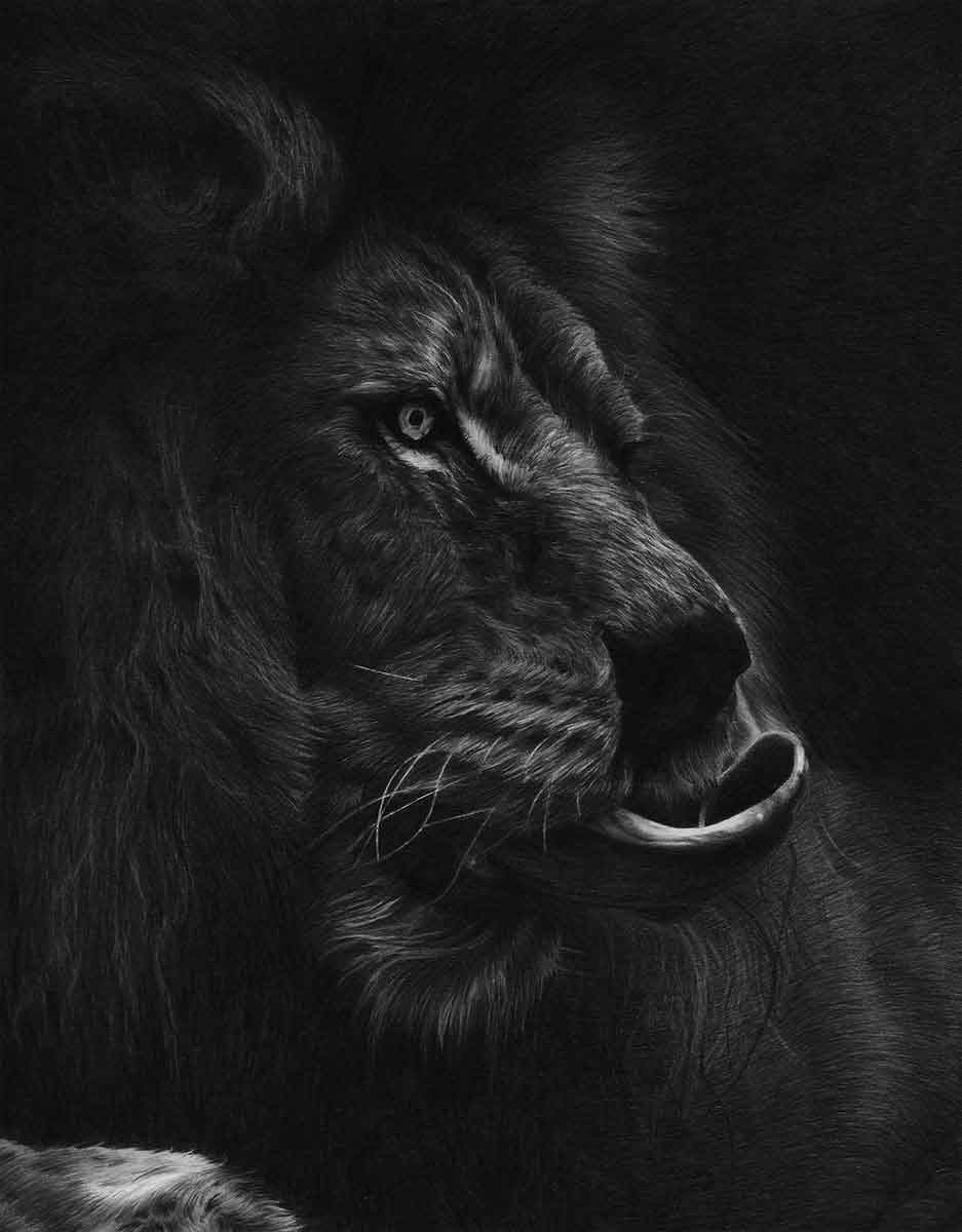 LION - OUT OF THE SHADOWS - REALISTIC PENCIL DRAWING