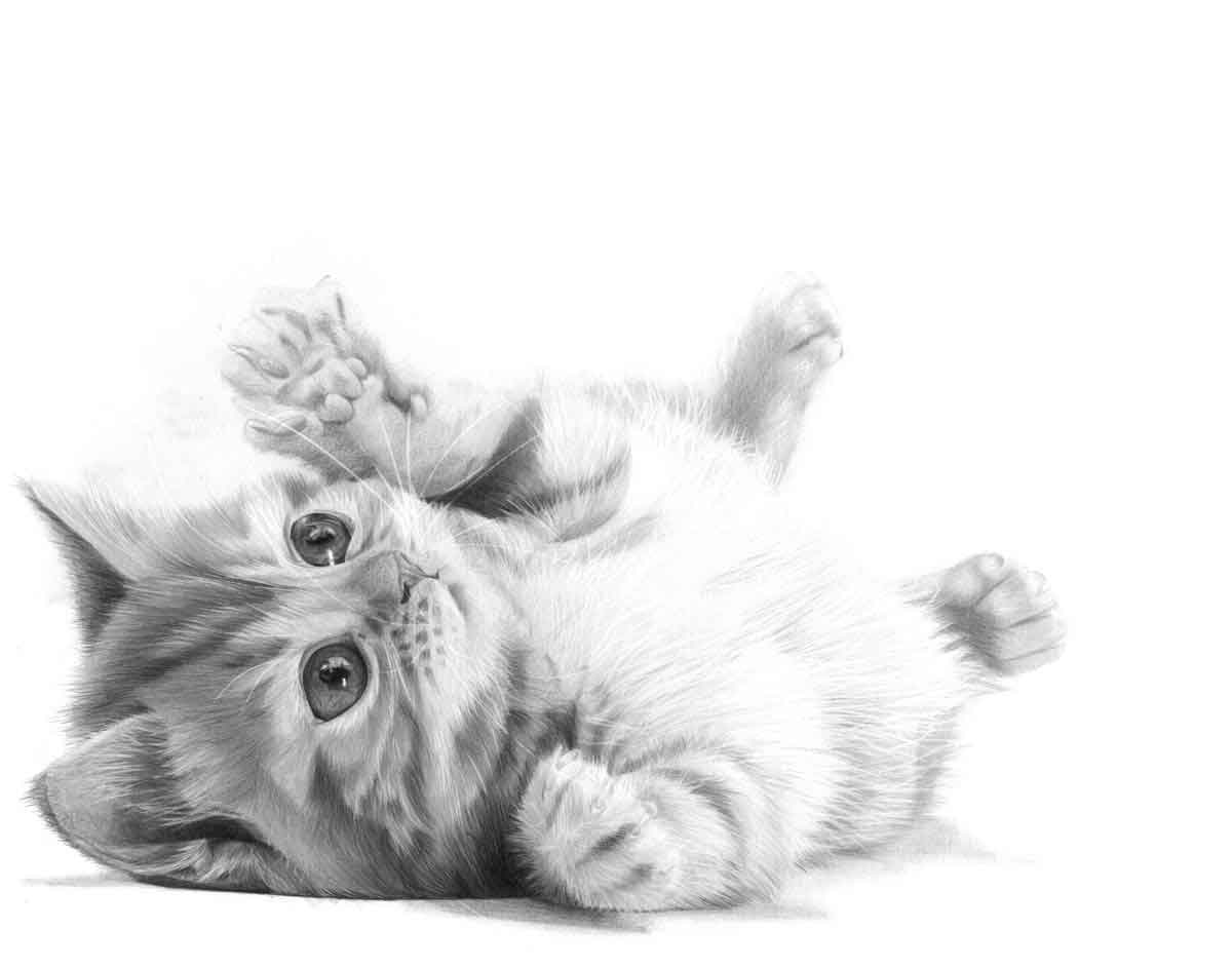 Realistic Pencil Drawing of a Puddy Cat, by Artist Sophie Lawson