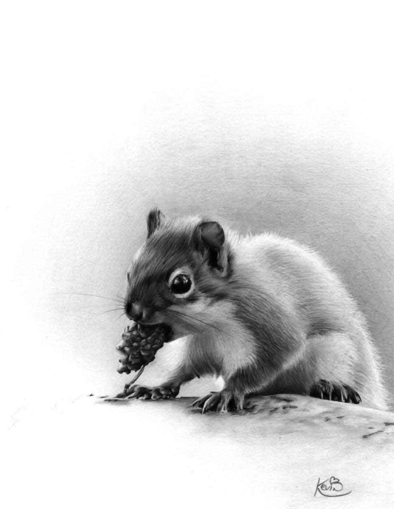 Realistic Pencil Drawing of a Squirrel, by Transgender Artist Sophie Lawson