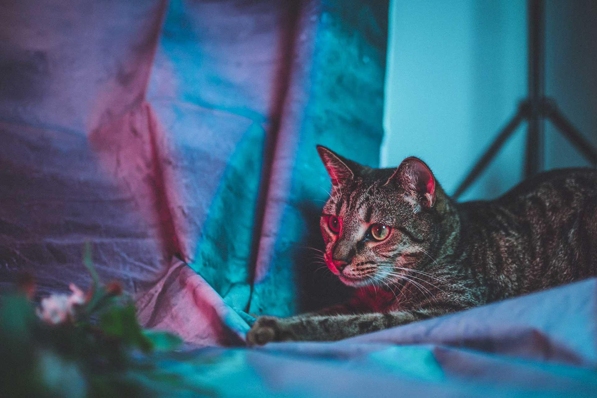 Inspirational Model Amy Thunderbolt Turbo the Cat