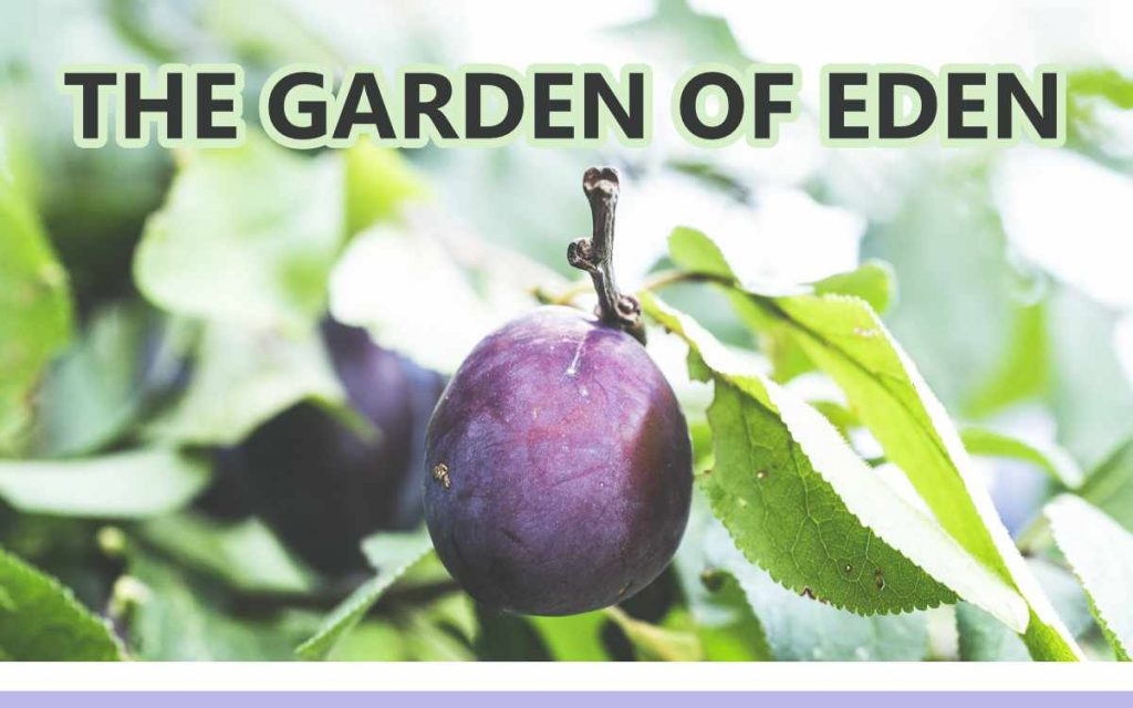 The Garden of Eden - An About the Tings Episode 175 of the So Free Art Podcast, with Transgender Artist Sophie Lawson
