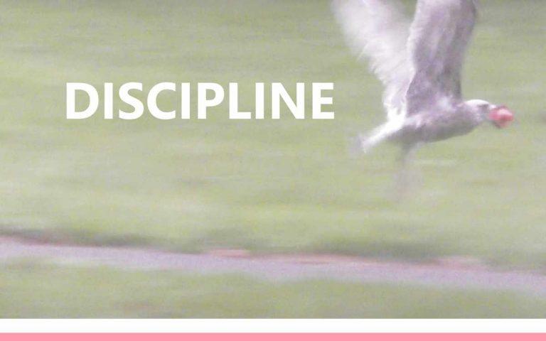 176 • DISCIPLINE
